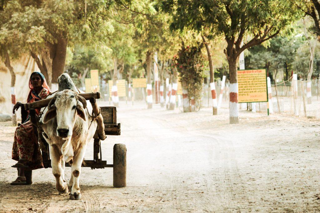 Rural ox cart